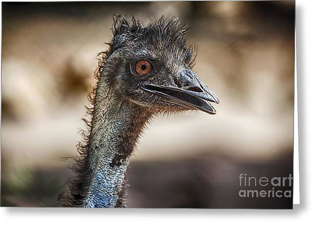 Emu Greeting Cards - Brown-Eyed Girl Greeting Card by Douglas Barnard