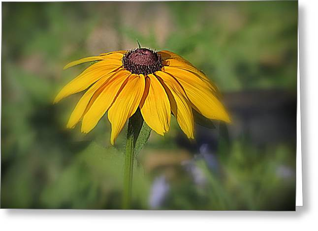 Kkphoto1 Greeting Cards - Brown Eyed Susan Greeting Card by Kay Novy