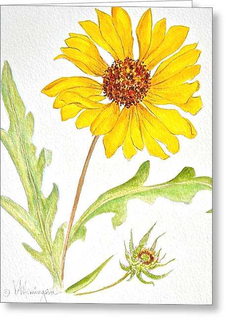 Canmore Artist Greeting Cards - Brown-eyed Susan Greeting Card by Virginia Ann Hemingson