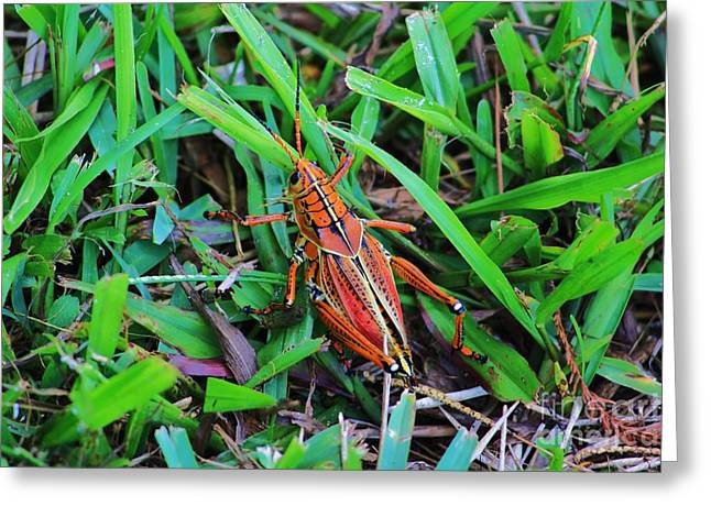 Brown Grasshopper Greeting Card by Chuck  Hicks