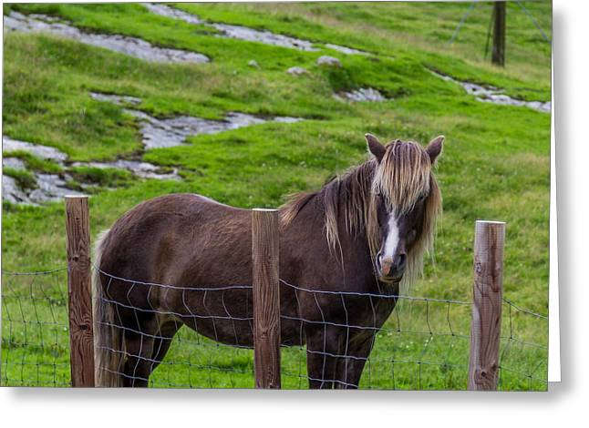 Brown Horse With Long Mane At The Field Greeting Card by Aldona Pivoriene