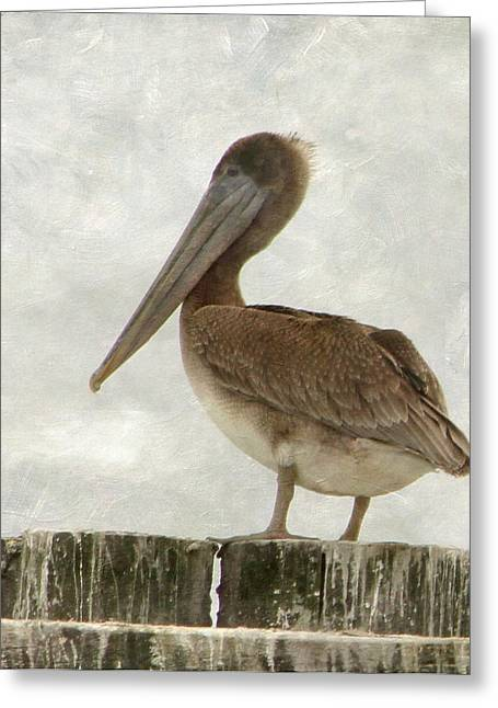 Sea Birds Greeting Cards - Brown Pelican Greeting Card by Angie Vogel