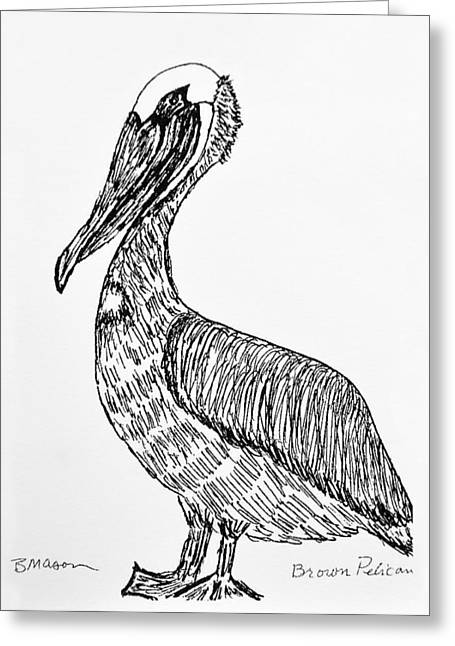Sea Birds Drawings Greeting Cards - Brown Pelican Greeting Card by Becky Mason