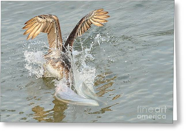 Brown Pelican In Florida Waters Surges Under For Fish Greeting Card by Wayne Nielsen