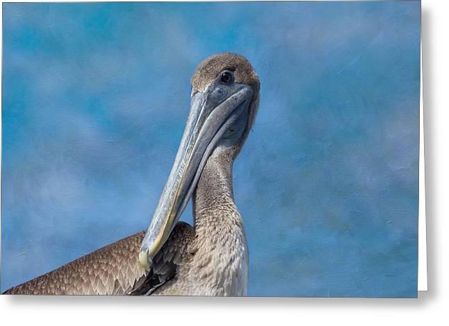 Water Fowl Greeting Cards - Brown Pelican Greeting Card by Kim Hojnacki