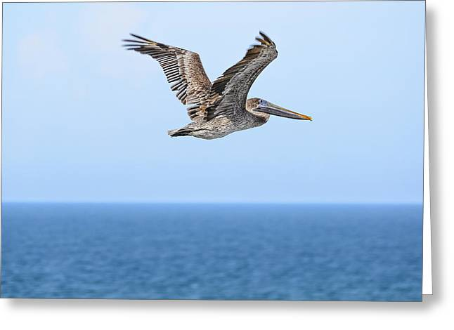 Pelicaniformes Greeting Cards - Brown Pelican over Water Greeting Card by Steve Samples