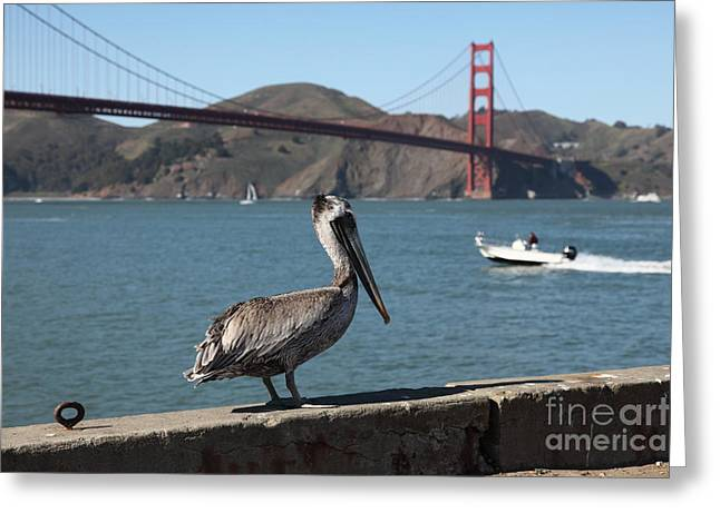 Frisco Pier Greeting Cards - Brown Pelican Overlooking The San Francisco Golden Gate Bridge 5D21670 Greeting Card by Wingsdomain Art and Photography