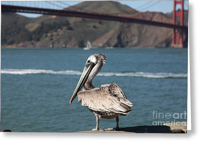 Frisco Pier Greeting Cards - Brown Pelican Overlooking The San Francisco Golden Gate Bridge 5D21672 Greeting Card by Wingsdomain Art and Photography
