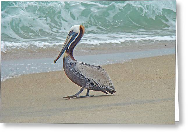 Nature Greeting Cards - Brown Pelican - Pelecanus occidentalis Greeting Card by Mother Nature