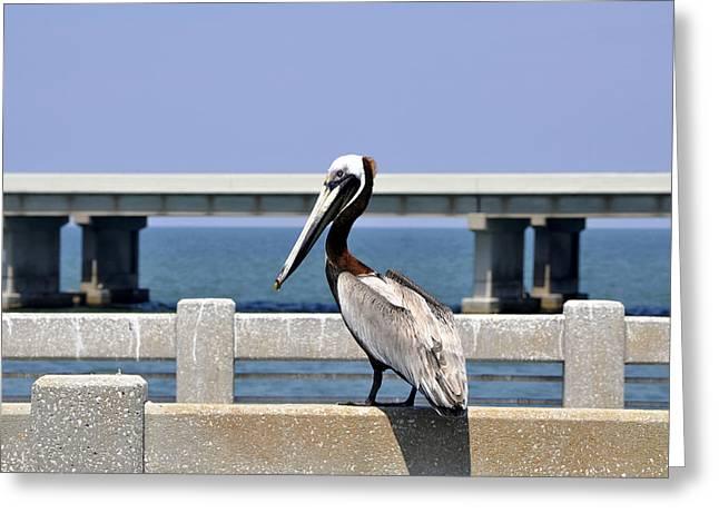 Silver Eye Shadow Greeting Cards - Brown Pelican Pelecanus occidentalis Standing on a Bridge USA Greeting Card by Sally Rockefeller