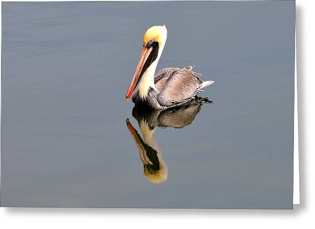 Nature Greeting Cards - Brown Pelican Reflection 2 Greeting Card by Debra Martz