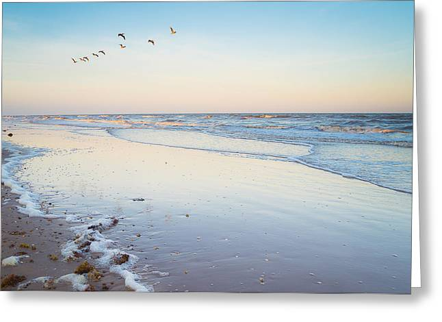 Evening Greeting Cards - Brown pelicans in the evening sky Greeting Card by Ellie Teramoto