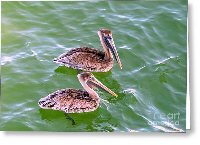 Pelican Greeting Cards - Brown Pelicans Greeting Card by Zina Stromberg