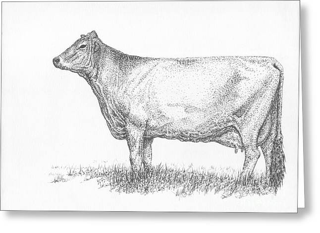 Brown Swiss Dairy Cow Greeting Card by J E Vincent