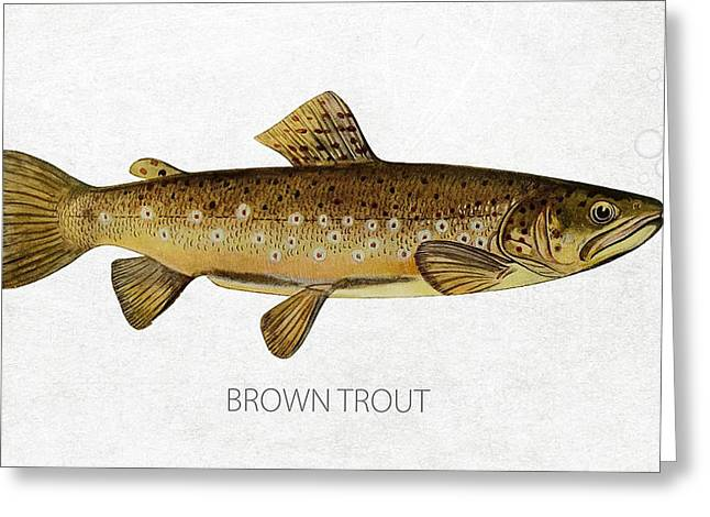 Fresh Water Fish Greeting Cards - Brown Trout Greeting Card by Aged Pixel