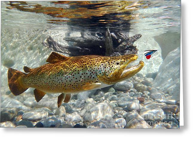 Brown Trout Digital Art Greeting Cards - Brown Trout and wet fly Greeting Card by Paul Buggia