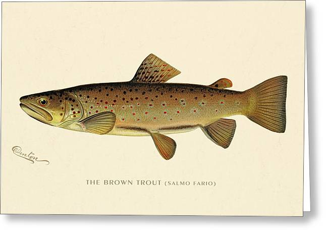 Antique Digital Greeting Cards - Brown Trout Greeting Card by Gary Grayson
