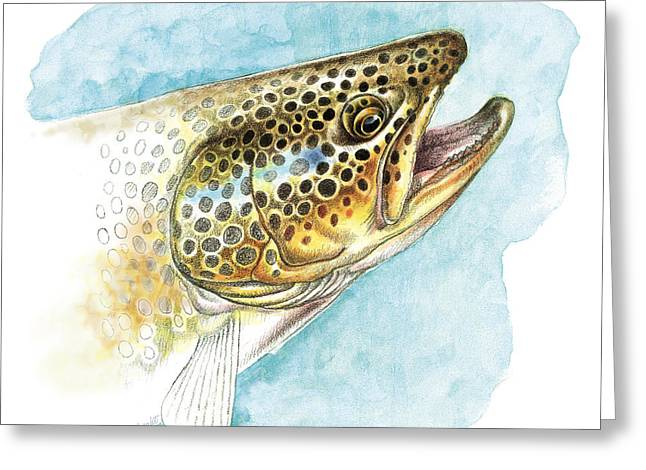 """rainbow Trout"" Greeting Cards - Brown Trout Study Greeting Card by JQ Licensing"