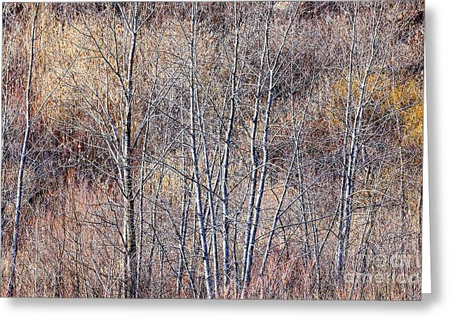 Muted Photographs Greeting Cards - Brown winter forest with bare trees Greeting Card by Elena Elisseeva
