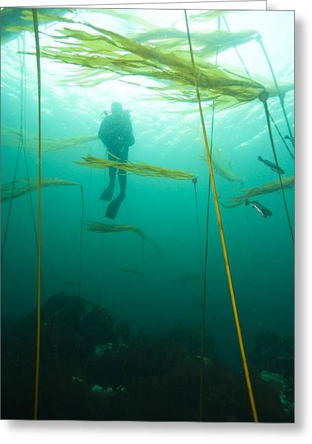 North Vancouver Photographs Greeting Cards - Browning Passage, Scuba Diving Greeting Card by Stuart Westmorland