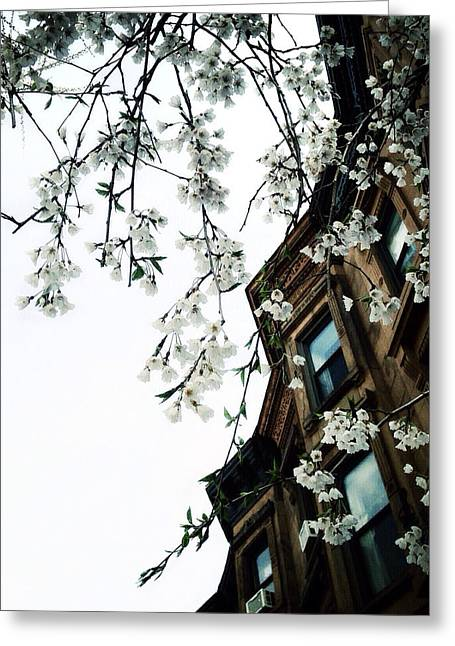 Prospects Greeting Cards - Brownstones and Blossoms Greeting Card by Natasha Marco