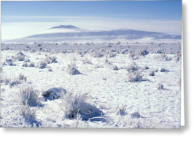 Brrrr 1021 Greeting Card by Brent L Ander