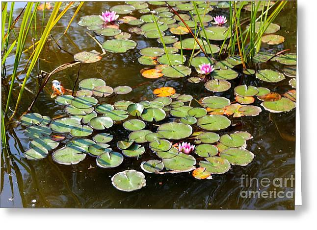 Bruges Lily Pond Greeting Card by Carol Groenen