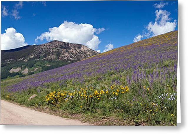 Larkspur Greeting Cards - Brush Creek Road And Hillside Greeting Card by Panoramic Images
