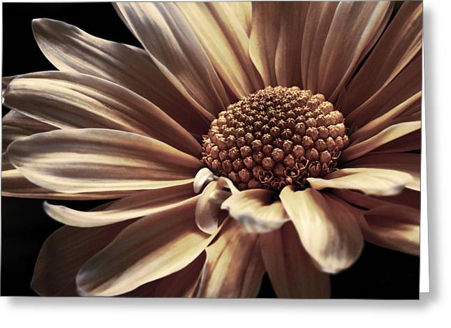 Gold Pink Floral Greeting Cards - Brushed Crown Gold Greeting Card by Darlene Kwiatkowski