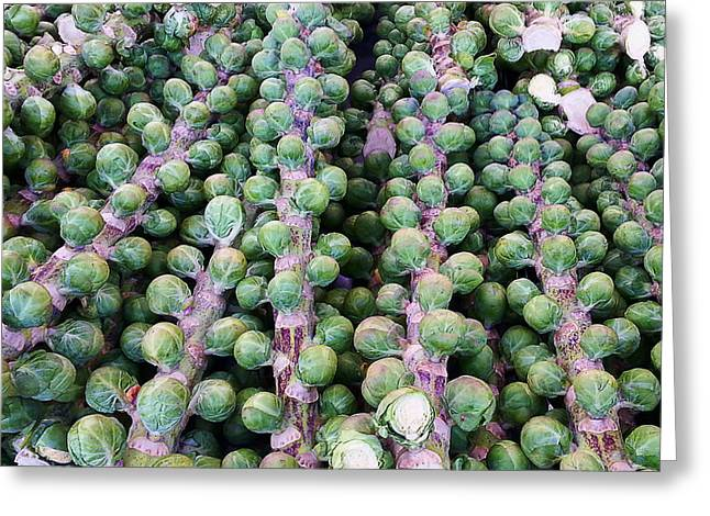 Ron Roberts Photography Greeting Cards - Brussel Sprout Trees Greeting Card by Ron Roberts