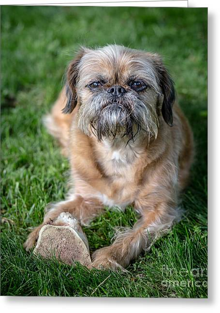 Rescue Photographs Greeting Cards - Brussels Griffon Greeting Card by Edward Fielding