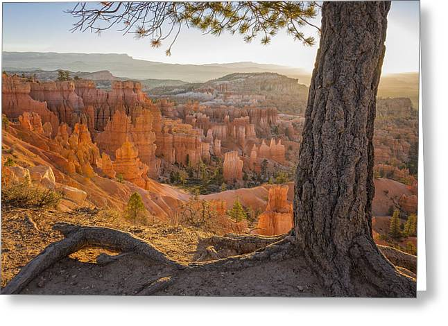 Light Beams Greeting Cards - Bryce Canyon National Park Sunrise 2 - Utah Greeting Card by Brian Harig