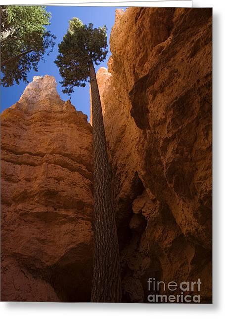 Southern Utah Greeting Cards - Bryce Canyon, Ut Greeting Card by Sean Bagshaw