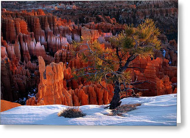 Bryce Canyon Winter Light Greeting Card by Leland D Howard