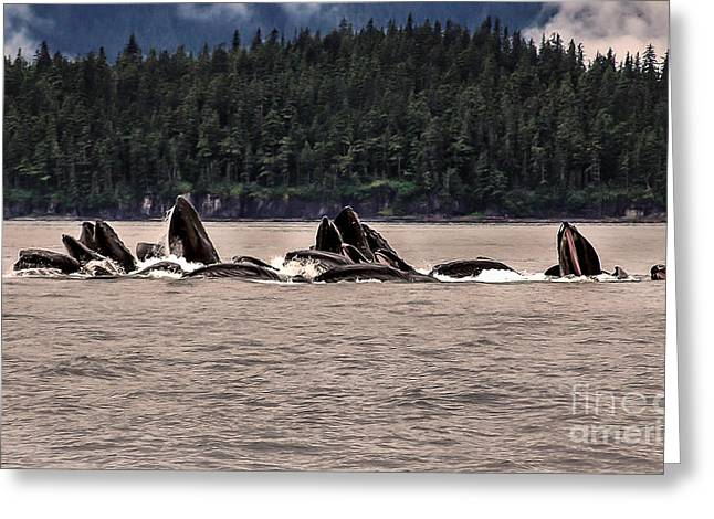 Whale Watching Greeting Cards - Bubble Net Greeting Card by Robert Bales
