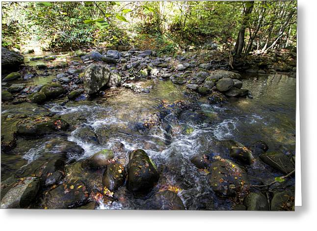 Gatlinburg Tennessee Greeting Cards - Bubbling Brook in the Smokies Greeting Card by Kathy Clark