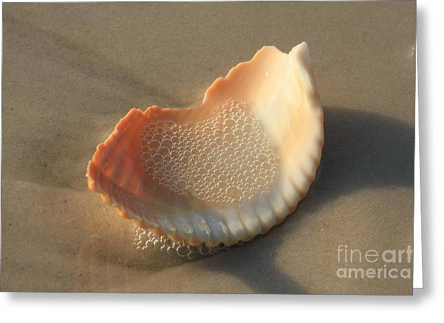 Colored Shell Greeting Cards - Bubbly Greeting Card by Adam Jewell