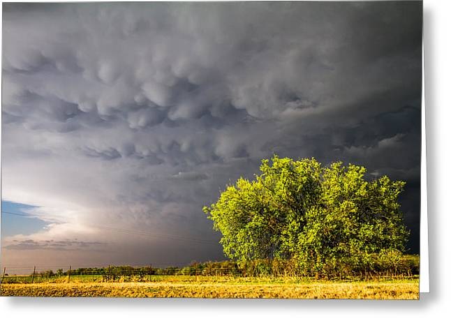 Lightning Photographer Greeting Cards - Bubbly Greeting Card by Sean Ramsey