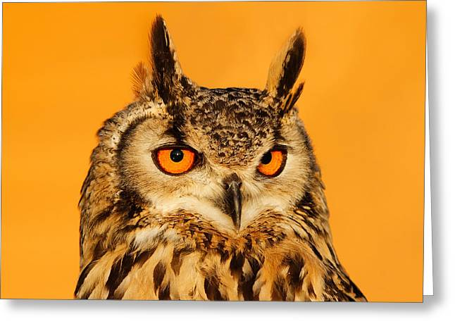 Bubo Bubo Greeting Card by Roeselien Raimond