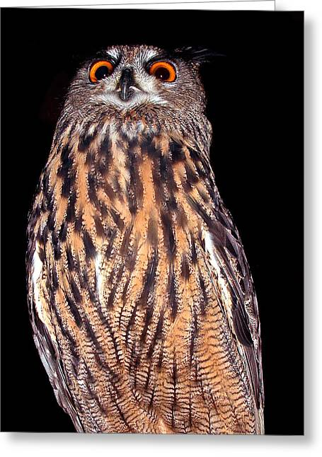 Jean Noren Greeting Cards - Bubo looks down Greeting Card by Jean Noren