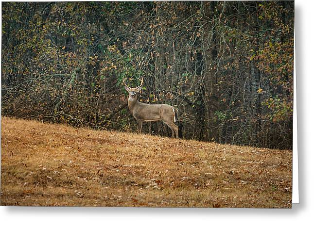 Mound Greeting Cards - Buck At Pinson Mounds Greeting Card by Jai Johnson