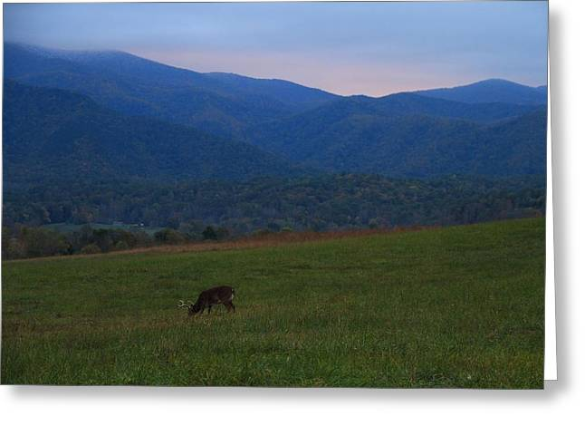 Gatlinburg Tennessee Greeting Cards - Buck At Sunrise Greeting Card by Dan Sproul