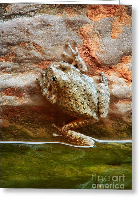 Backcountry Greeting Cards - Buck Farm Frog Greeting Card by Inge Johnsson