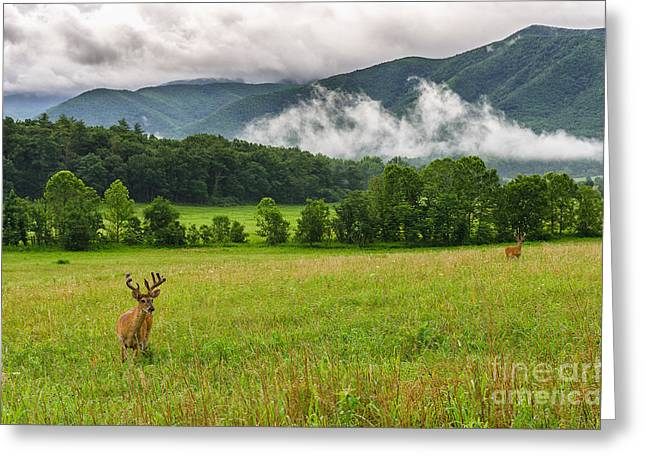 Cades Greeting Cards - Buck in velvet Greeting Card by Anthony Heflin