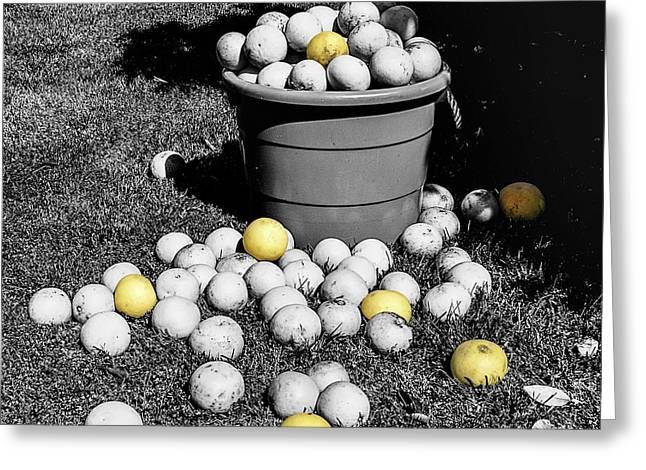 Gleaning Greeting Cards - Bucket Of Grapefruit Greeting Card by Rebecca Dru