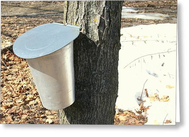 Dripping Tap Greeting Cards - Buckets For Collecting Maple Sap Greeting Card by Nadine Mot Mitchell