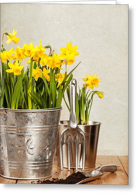 Shed Photographs Greeting Cards - Buckets Of Daffodils Greeting Card by Amanda And Christopher Elwell