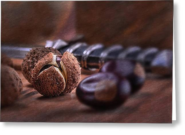 Glabra Greeting Cards - Buckeye Nut Still Life Greeting Card by Tom Mc Nemar