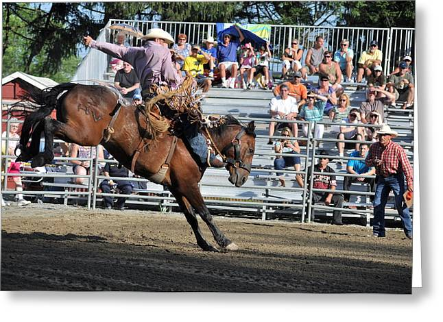 Rodeo Greeting Cards - Bucking Bronco Greeting Card by Gary Keesler