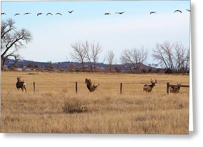Mule Deer Buck Photograph Greeting Cards - Bucks and Geese Greeting Card by Jim Garrison